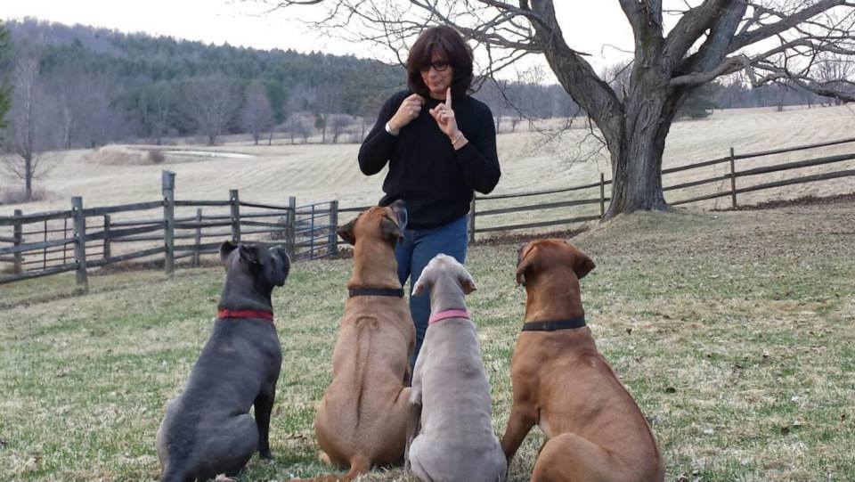 lisa-davis-training-dogs
